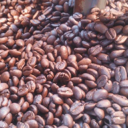 本月限時--好康快訊(本標再多送半磅)營業用爪哇阿拉比卡咖啡豆4磅(1800公克)